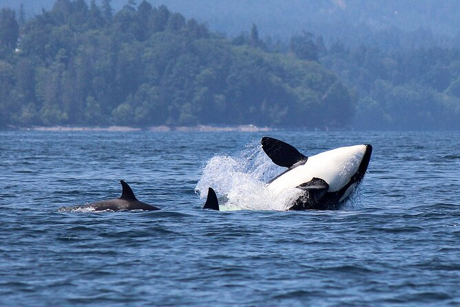 Vancouver Whale Watching Adventure