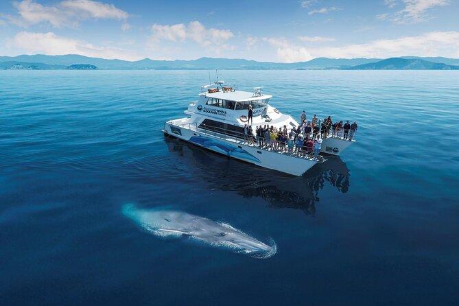 Auckland Marine Safari Experience