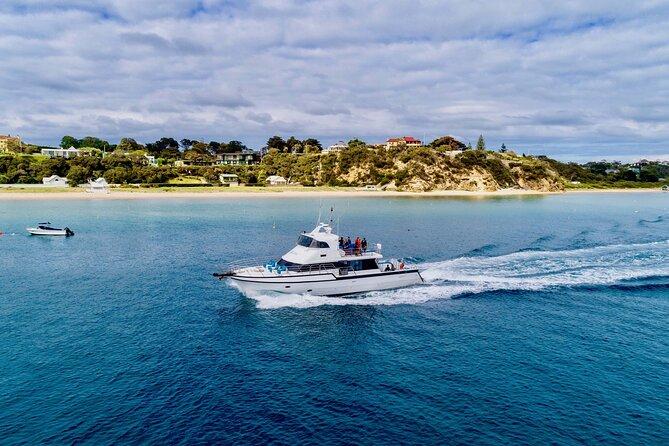 90minute Wildlife Adventure Cruise from Sorrento