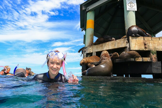 2 hour Snorkel with the Seals