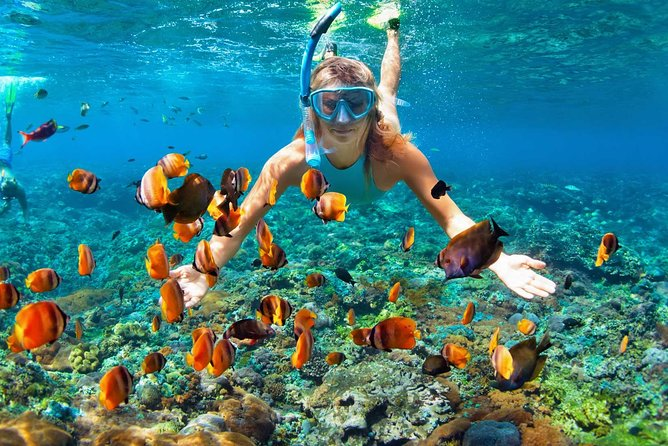 Ras Muhammad National Park: Snorkeling Tour with White Island