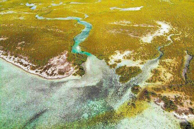 Mangrove Eco Discovery