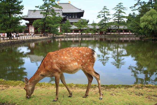 Nara Park (Nara Koen)