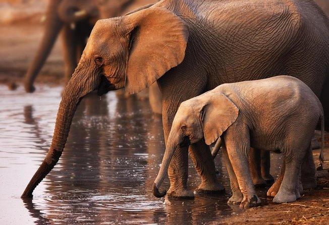 Parco nazionale Addo Elephant