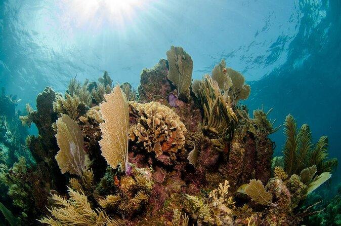 Cheeseburger Reef
