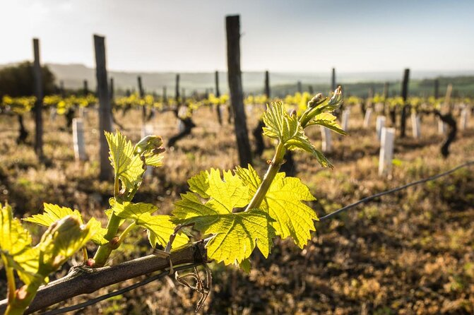 Graves Wine Region