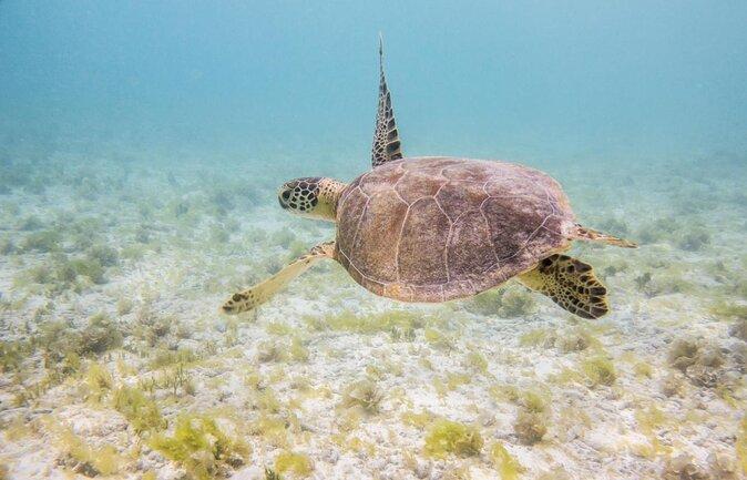 Aquarium marin de Curaçao