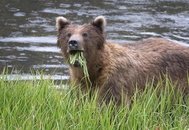 Fortaleza do Urso