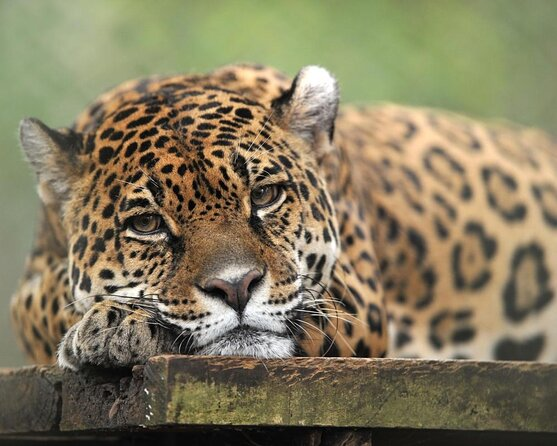 Zoo et jardin botanique d'El Nispero