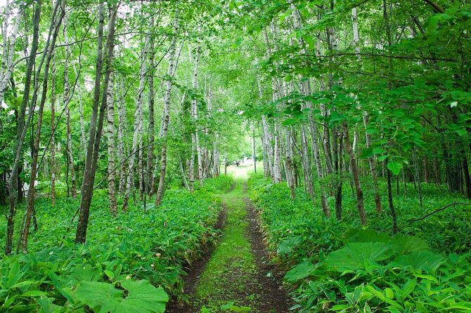 Nopporo Forest Park (Nopporo Shinrin Koen)