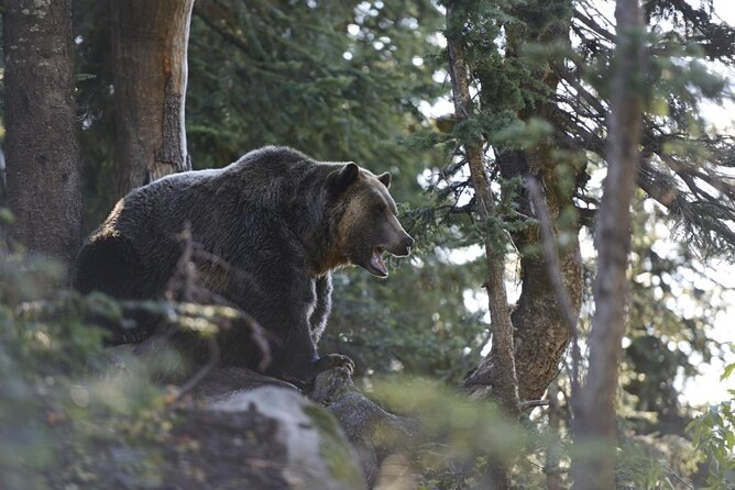 Grouse Mountain Refuge for Endangered Wildlife