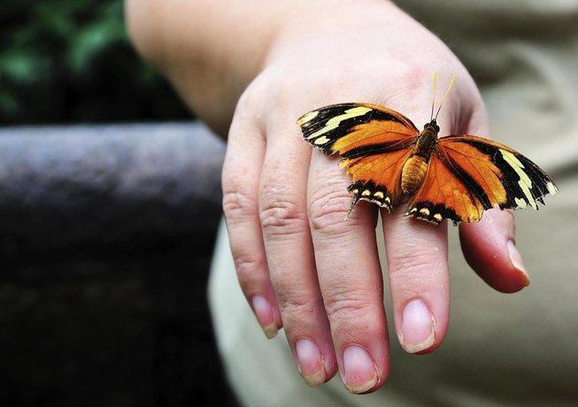 Jardins aux papillons de Monteverde