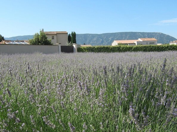 Lavendelmuseum (Musee de la Lavande)