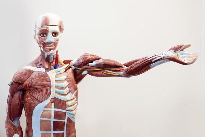Bodies: The Exhibition