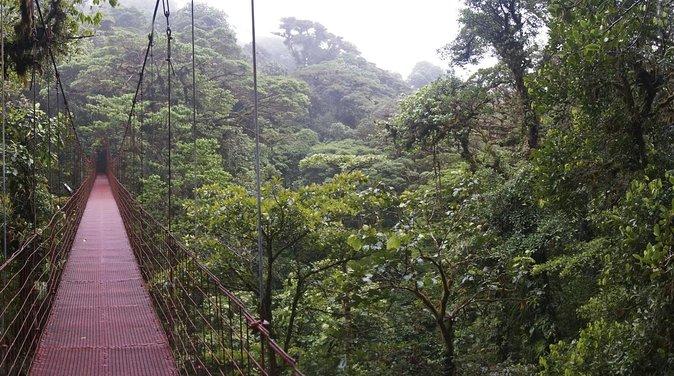 Réserve biologique de la forêt nuageuse de Monteverde