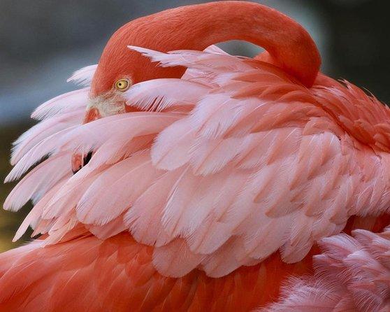Flamingo-tuinen