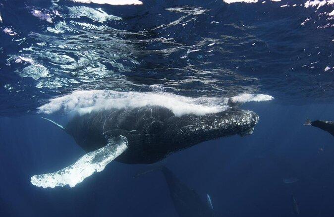 Whale Museum and Nature Center (Museo de la Ballena)