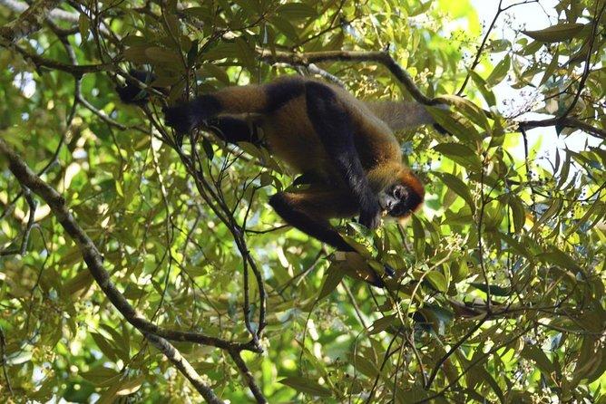 Refúgio de Vida Selvagem Caño Negro (Refugio Nacional de Vida Silvestre Mixto Caño Negro)