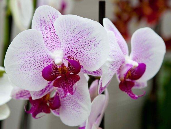Jardins d'orchidées d'Akatsuka