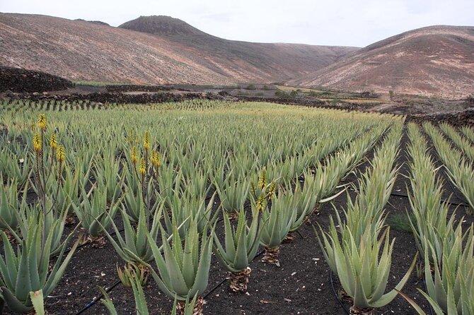 Fábrica e Museu de Aloe Aruba