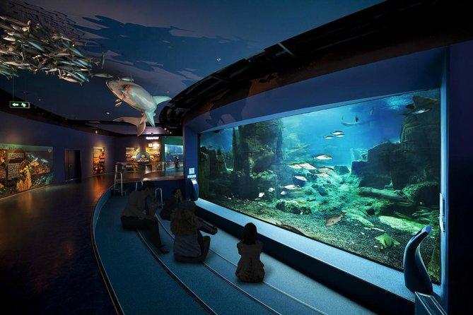Istanbul Aquarium (Istanbul Akvaryum)