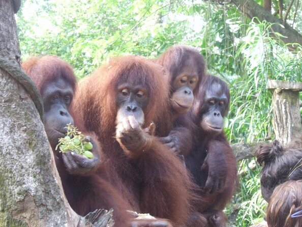 Zoo di Napoli a Caribbean Gardens