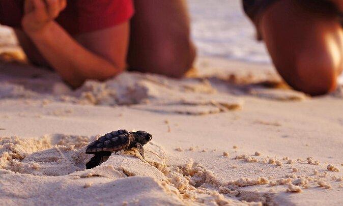 Iztuzu Beach (Turtle Beach)