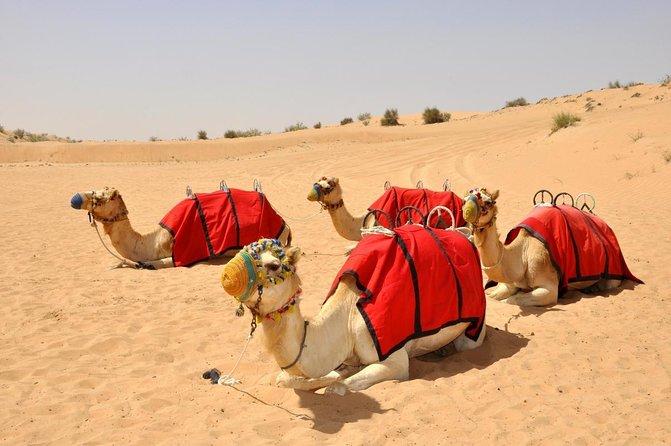 Dubai Desert Conservation Reserve (DDCR)