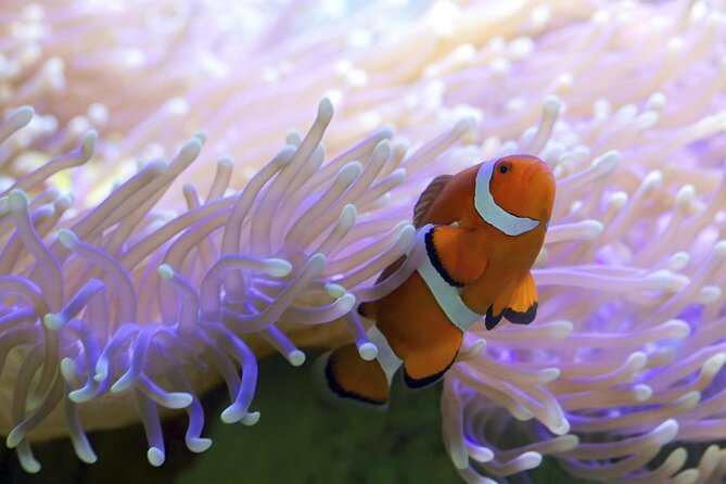Agincourt Reefs