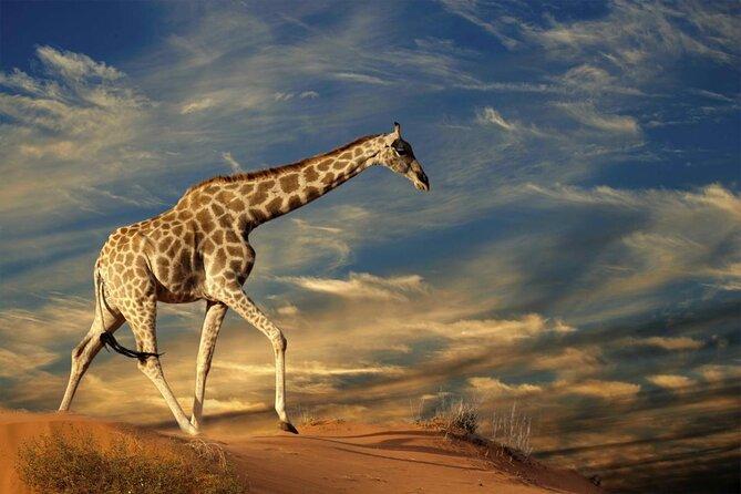 Deserto de Kalahari