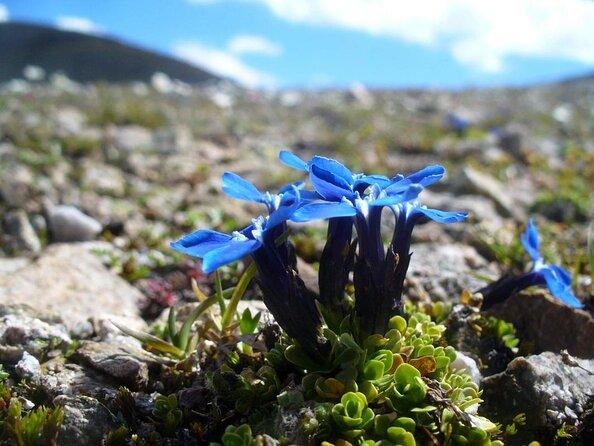 Jardin botanique arctique-alpin (Botaniske Hage)