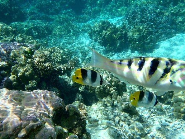 Jardins de corail