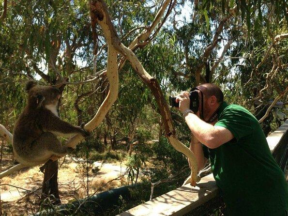 Koala Reserve (Koala Conservation Centre)