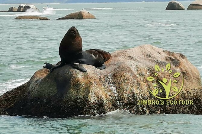 Interpraias Tour With Sea Lion Visit - By Zimbros Ecotour