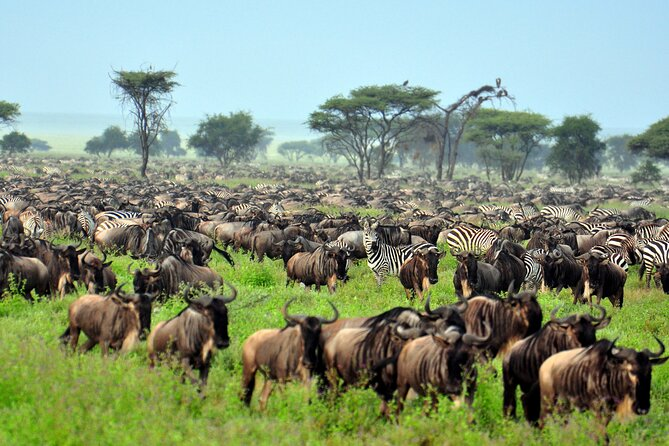 Serengeti Wildebeests Migration Watch 7 Days/ 6 Nights