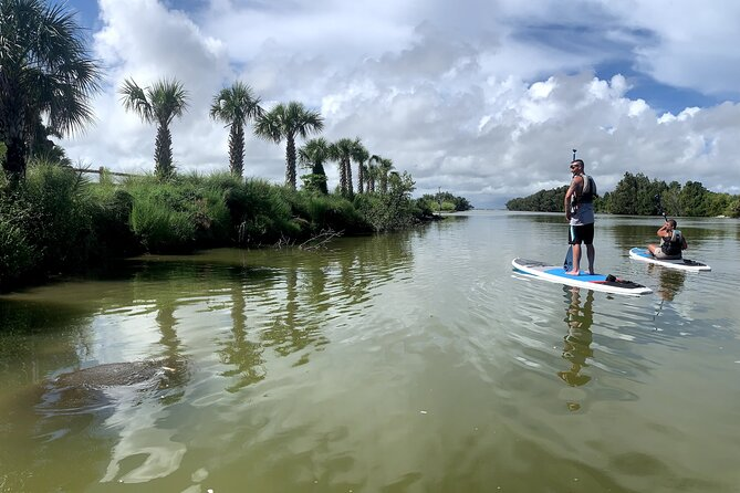 Wildlife Refuge Dolphin, Manatee & Mangrove Kayak or Paddleboarding Tour!