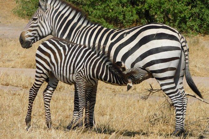 Tarangire -Serengeti & Ngorongoro Crater Budget camping safari