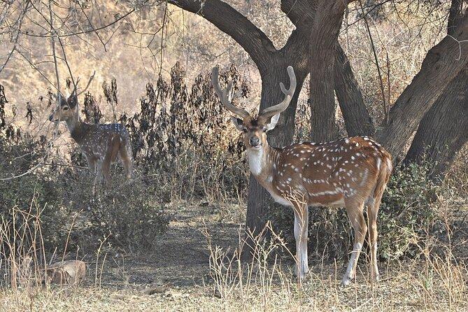 Rajasthan Wildlife Tour With Ranthambore, Bharatpur & Sariska