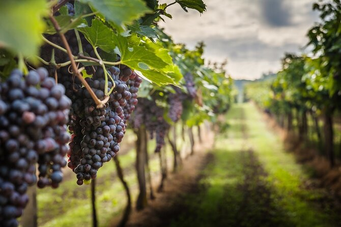 Half-Day Private Tuscany Wine Tour to Chianti from Florence