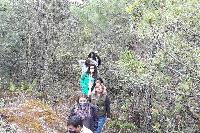 Nature walk, Sierra Norte de Oaxaca