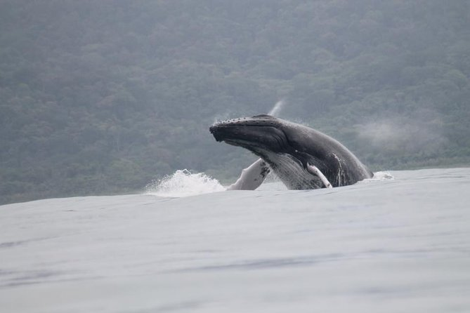 Whales and Dolphins watching Tour From Uvita