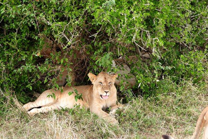 3 Days Camping in the Masai Mara Game Reserve