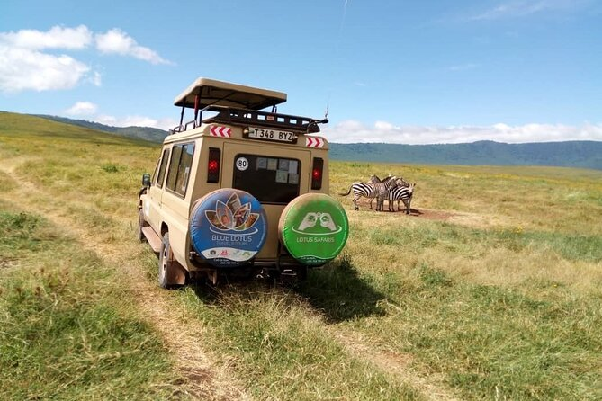 A close snap shot of Zebras in the Ngorongoro Crater