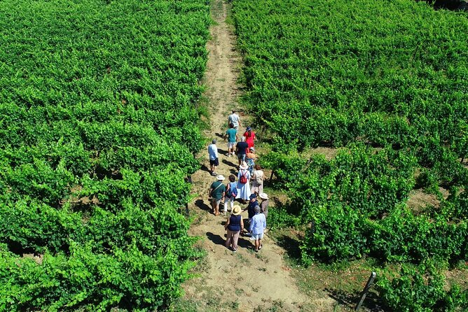 Douro Valley with 3 Different Wineries with Boat Cruise and Lunch (Small Group)