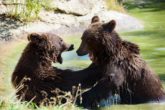 Meet the Free Bears and visit Dracula's Castle in a Day Trip from Bucharest