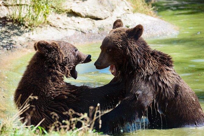 Bear Sanctuary & City of Brasov One Day Trip