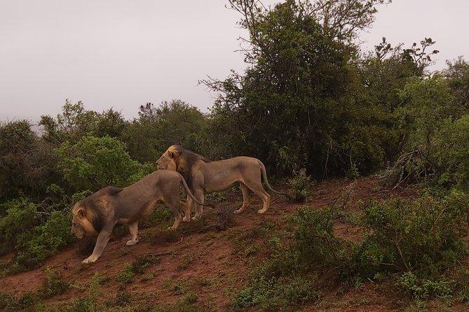 Full-Day Addo Elephant National Park Safari Tour