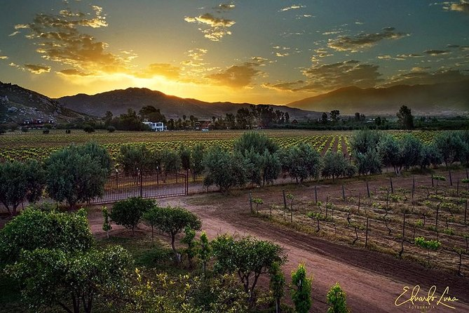 Guadalupe Wine Valley Tour