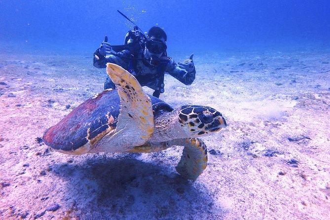 Scuba Diver Certification Course