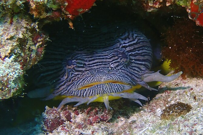 Scuba Diving Adventure without Certification! Try it today!
